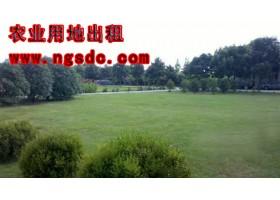 上海松江180农业用地出租