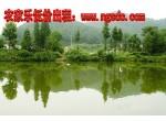 浦东新区 南汇 滴水湖旁80亩农庄低转