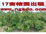 崇明县绿华华西村17亩桔园出租